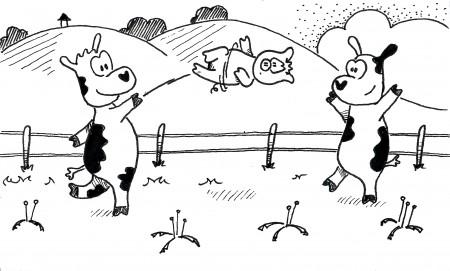 Pasture Pigskin